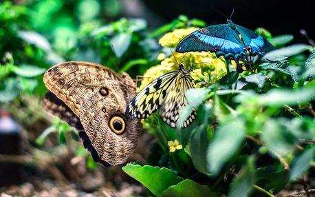 Vstupenky do Papilonie se stovkami exotických motýlů