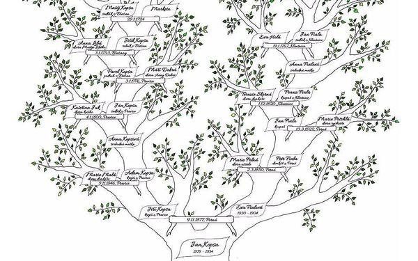 Vytvoření rodokmenu po příjmení otce či matky – 5 generací2