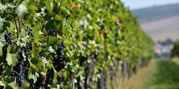 Dárkový balíček šesti druhů moravských zemských vín + videodegustace se someliérem, U vás doma, 6 lahví vína + videodegustace + doručení po ČR3