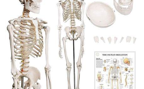 Jago 74072 Kostra lidské anatomie 181,5 cm