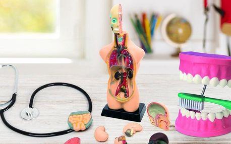 Jak funguje člověk: modely lidského těla i zubů