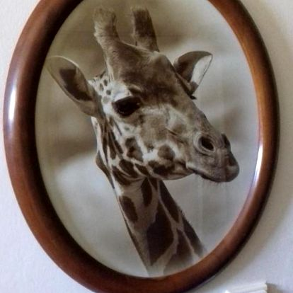 Dvůr Králové nad Labem: Apartmán Žirafa