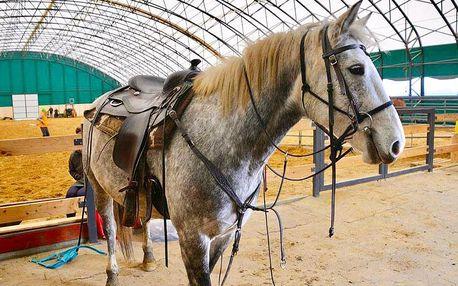 Práce s koňmi na Ranči Orel