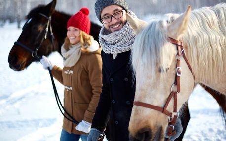S koněm na procházku: péče i vodění koně