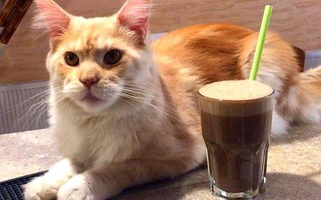 Káva a dort v kočičí kavárně pro 1 nebo 2 osoby