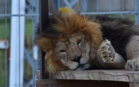 Zážitková noc v ZOO - soukromé safari až pro 4 osoby