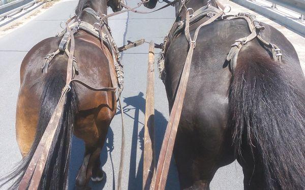 Vyjížďka na koni2
