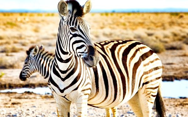 Rozmanité krásy Namibie se safari, letecky, polopenze3