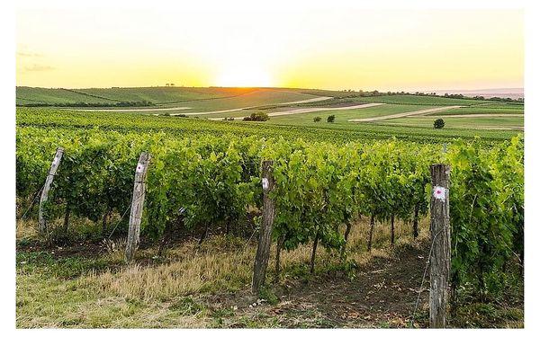 Vinobraní ve Velkých Pavlovicích s cyklistikou, Jižní Morava