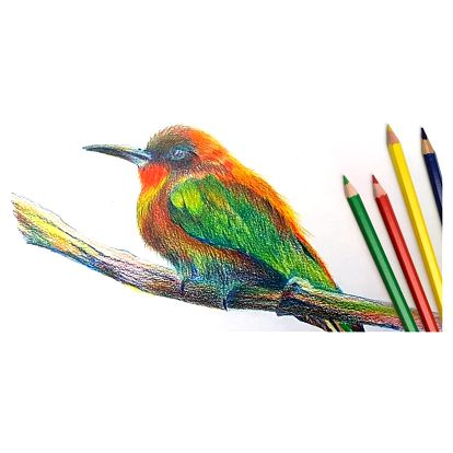 Online kurz Ptáček pastelkou moderně a od začátku
