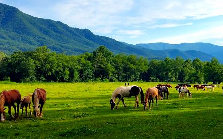 Nízké Tatry: Pobyt na ranči vč. polopenze