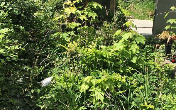 Jednorázový úklid hrobového místa3