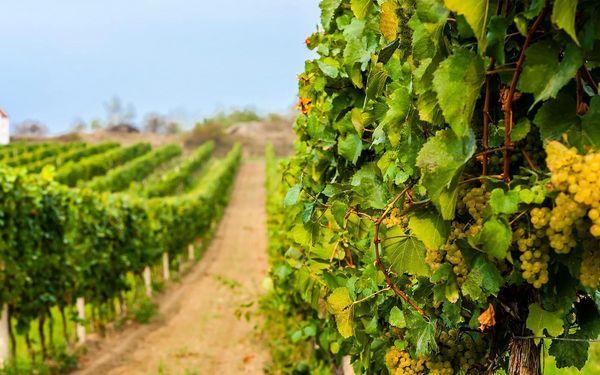 Jižní Morava: konzumace vína i vstup do sauny