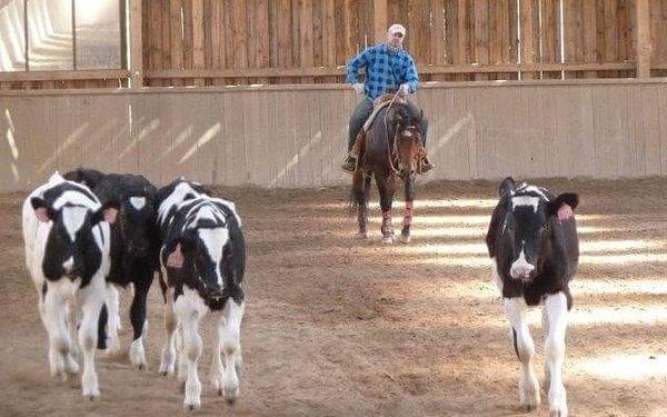 Odpočinek na ranči | Pavlov | Duben - prosinec. | 3 dny/2 noci.3