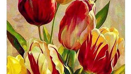 Malování podle čísel B012340