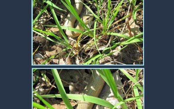 Kniha o přírodě Od vroubenky ke hvězdám2