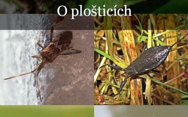 Kniha o přírodě Od vroubenky ke hvězdám5