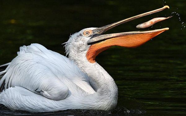 5hodinový fotokurz v zoo: základy fotografování