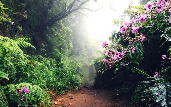 Fly & Drive: Objevte Madeiru!, Madeira, letecky, polopenze3