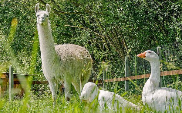 Procházka s lamou i piknik v parku se zvířátky
