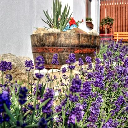Vrbice, Jihomoravský kraj: Levandulová chalupa