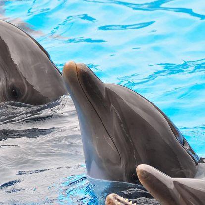 Jednodenní výlet do Norimberku: zoo a delfinárium