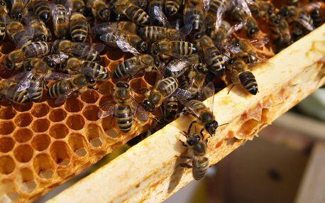 Včelí farma: exkurze a výroba svíček až pro 4 osoby