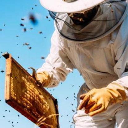 Včelí farma: výroba svíček a ochutnávka medu – 2 osoby