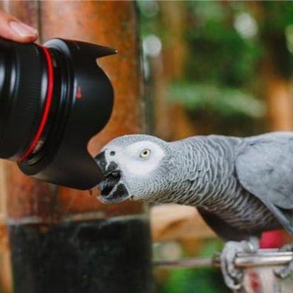 Fotografický kurz v ZOO Liberec