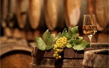 Dovolená na Moravě pro gurmány: vinařská stezka