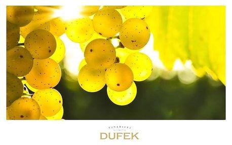 Degustace 8 lahví přívlastkových vín se zkušeným sklepmistrem