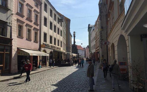 Olomouc, Olomoucký kraj: Apartment in Olomouc Old Town Centre