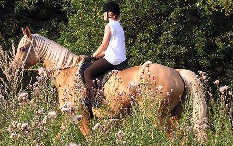 Procházka s koníkem, vyjížďka či výuka na jízdárně