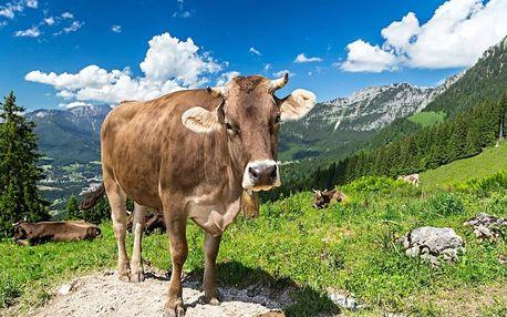 Dovolená mezi švýcarskými Alpami a Bodamským jezerem v hotelu se 100% doporučením 4 dny / 3 noci, 2 os., snídaně