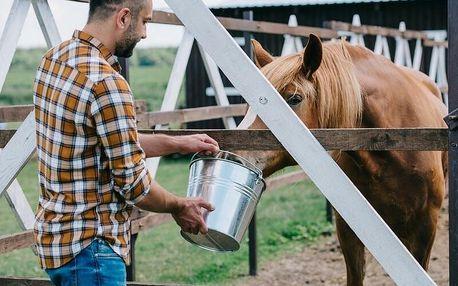 Farmářem na jeden den aneb den u koní