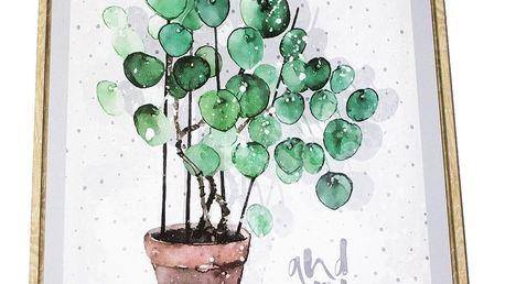Obraz na plátně v rámu Eucalyptus, 40 x 50 cm