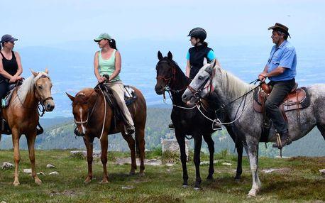 Vyjížďka na koni nebo výcvik v jízdárně pro 1 osobu