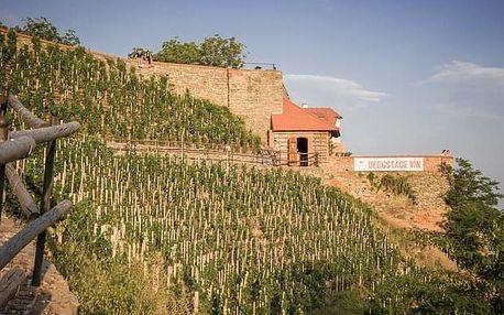 Degustace osmi vzorků vín Lahofer na Rajské vinici