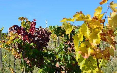 Degustace deseti vzorků vín Lahofer na Rajské vinici