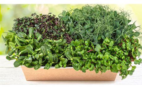 Microgreens nabité vitamíny: ředkev, hrášek i mix