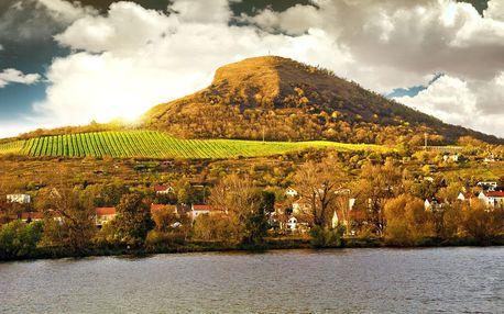 Prohlídka vinohradu, vinařství a řízená degustace