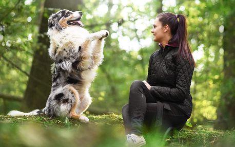 Online kurz poslušnosti pro dospělé psy i štěňata