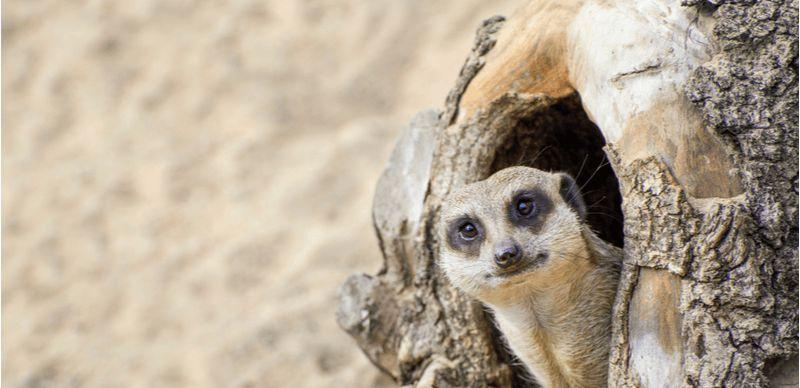 Výlety po lockdownu: Zoo, stezky a další